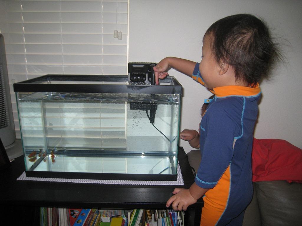 Fish baby wong caleb wong caris wong chloe wong for Fish tank filter walmart
